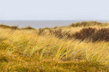 Noordzeekust in Zeeland van Achim Prill