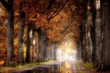 Après la pluie sur Kees van Dongen