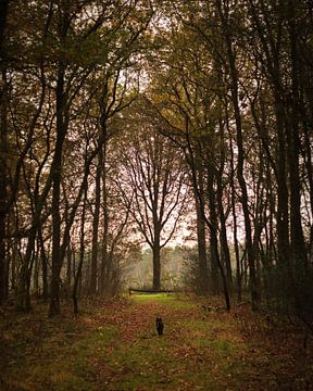 Autumn forest von Luis Fernando Valdés Villarreal Boullosa