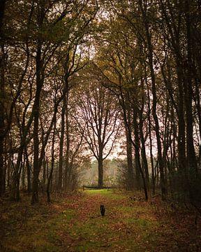 Autumn forest van Luis Fernando Valdés Villarreal Boullosa