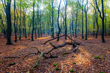 Speulderbos (Nederland) van Albert Mendelewski