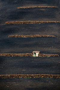 Muurtjes in landbouwveld