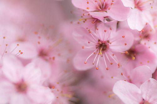 Dreamy blossoms van