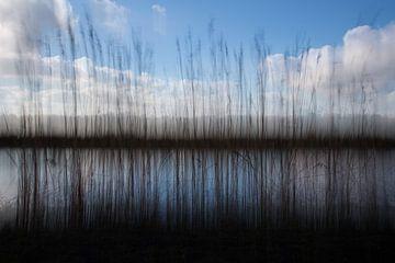 Schilfrohr von Ellen Middelkoop