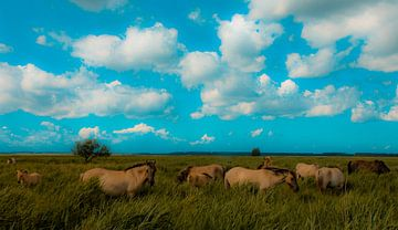 Horses von Anne Koop