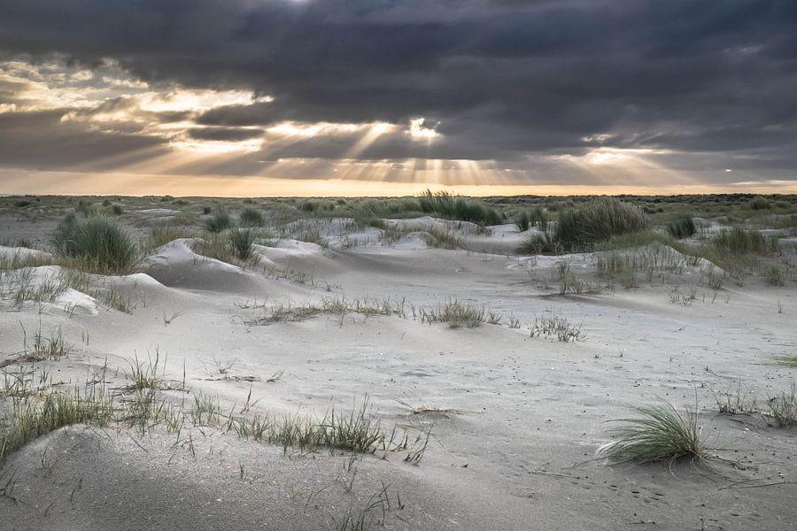 Amelandse duinen van Niels Barto