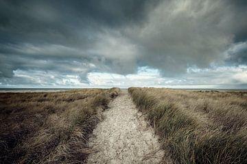 Dunes of Texel van Ruud van den Berg