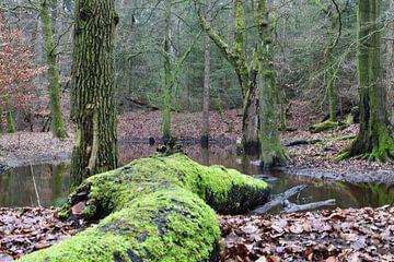 Een dode boom op land en in het water(liggend) van Gerard de Zwaan