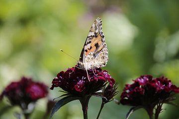 Vlinder von Nikki Ickx