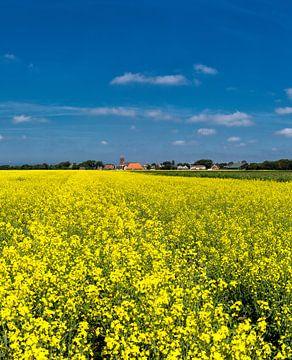 Field of rapeseed, Oosterend, Texel, Noord-Holland, Texel, Netherlands sur Rene van der Meer