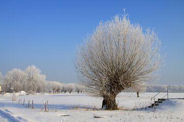 Kopfweide im Winter von Karina Baumgart