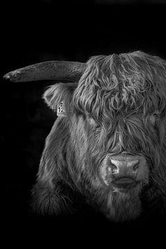Portret van een schotse hooglander in zwart wit van 7.2 Photography
