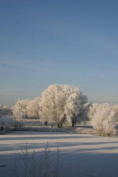 Witte bomen van Erwin Woutersen