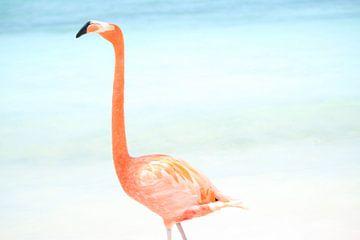 Flamingo sur Willemijn van Donkelaar