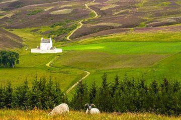 Schloss Corgarff Schloss Cairngorms Schottland von Dirk van Egmond
