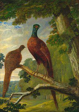Een fazanten haan en hen, John Frederick Herring.