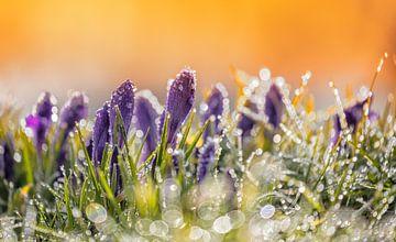 Frühjahr! von Bart Verbrugge