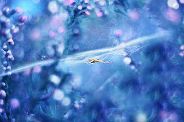 Hidden dream world  von Michelle Zwakhalen