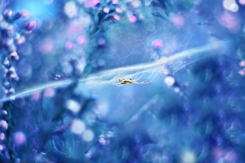 Hidden dream world  van Michelle Zwakhalen