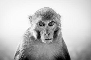 Portrait d'un singe sur Ellis Peeters