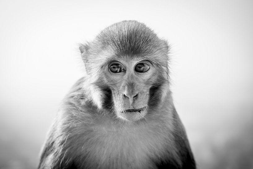Portret van een aap van Ellis Peeters