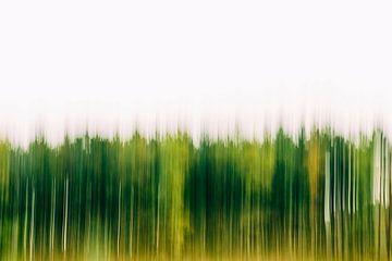 grüner Wald von Dennis Robroek