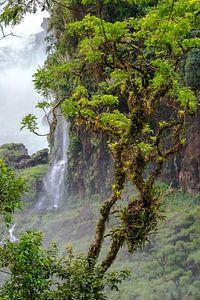 Regenwoud bij Iguazu van