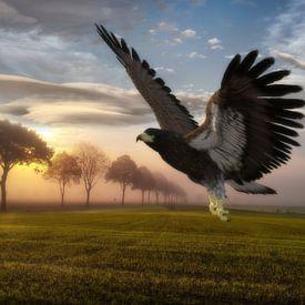Adler in der Landschaft hs von H.m. Soetens