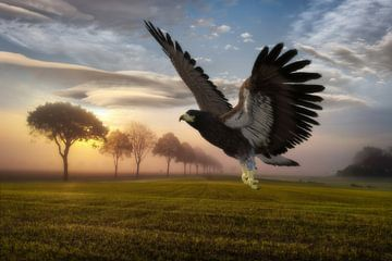 eagle in landscape hs van H.m. Soetens