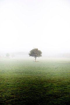 Eenzame boom van Emma Pille
