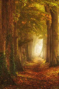 Zauberhafter Waldweg von Lars van de Goor