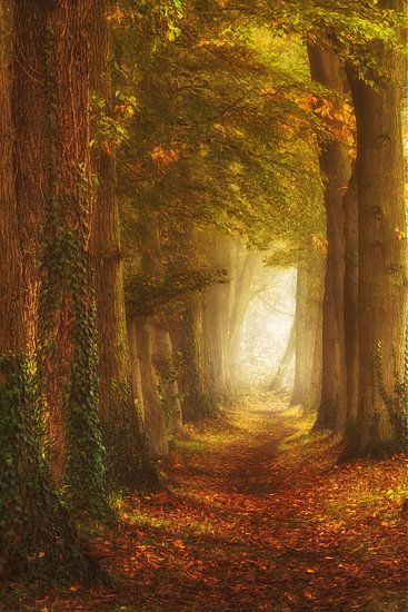 Zauberhafter Waldweg