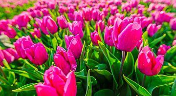 Paarse tulpen van Wouter van Woensel