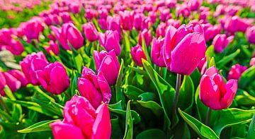 Violette Tulpen von Wouter van Woensel