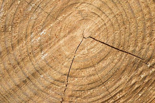 Gezaagde stam  boomstam ringen van