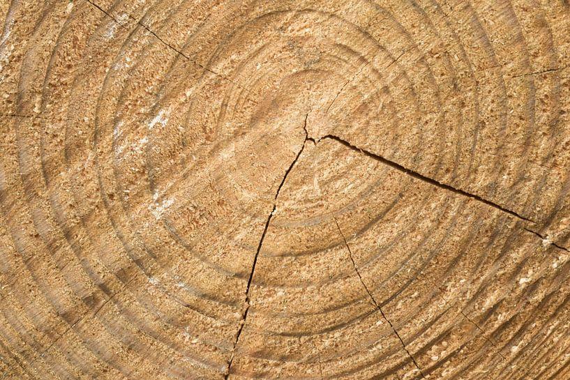 Gezaagde stam  boomstam ringen van Art Wittingen