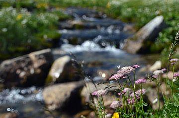 Ruisseau de glacier avec des fleurs berbères sur Sandra Knittel