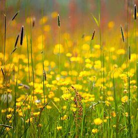 Veld met grassen, boterbloemen en zuring van R Smallenbroek