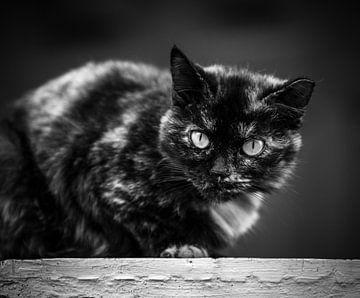 Treppe mit Katze von videomundum