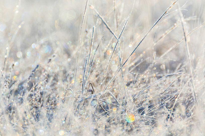 Frosty Morning van Nanda Bussers