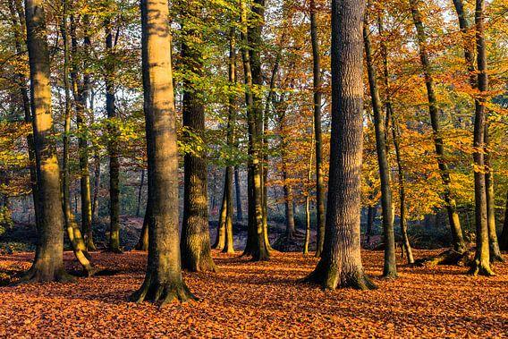 Autumn Light van William Mevissen