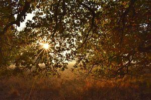 Sonniger und bunter Herbst
