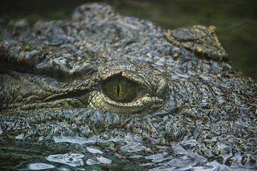 Krokodillen oog van Rob Legius