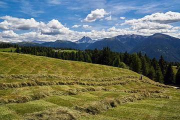 Zuid-Tirol - Hooioogst met het oog op de Peitlerkofel van