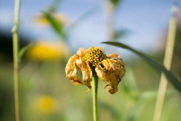 Flower von Juliën van de Hoef