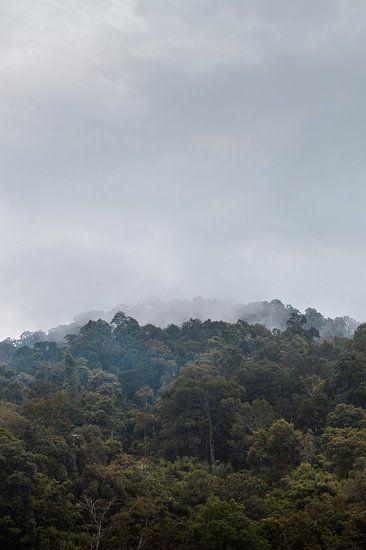 Mist boven het oerwoud
