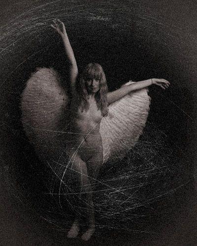 Engel 10 van