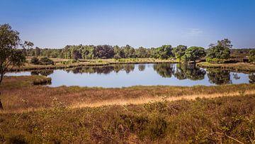 See nahe in NP Maasduinen von Jaap Mulder