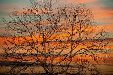 Baum Baumkrone gegen roten Himmel von Anouschka Hendriks