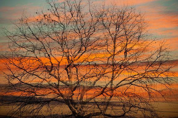 Boomkruin tegen rode lucht van Anouschka Hendriks